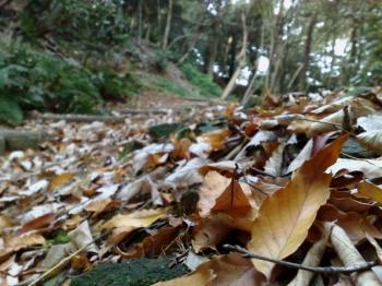 小牧山・枯葉の絨毯