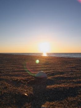 太陽と砂紋そして貝殻