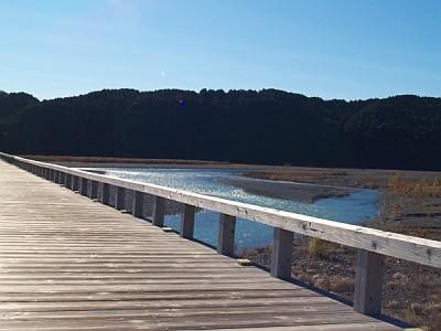 蓬莱橋か見た大井川