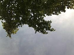 見上げる風景