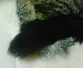 くっついてるときの尻尾と尻尾