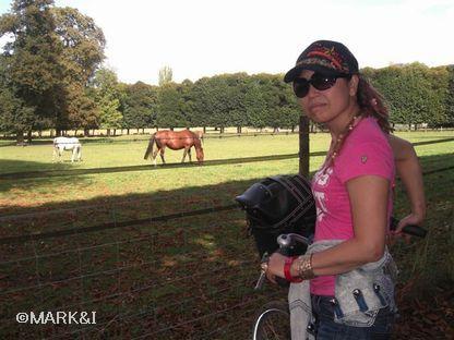 やっぱヴェルサイユに馬がいたよん!乗馬クラブめっけ!さっそく乗馬交渉に