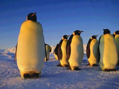 #120 LA MARCHE DE L'EMPEREUR (2005) 皇帝ペンギン