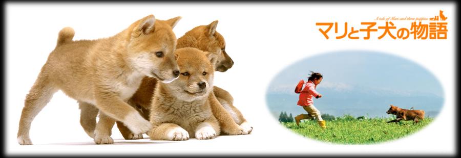 #695 マリと子犬の物語 (2007) Mari and puppys story 00