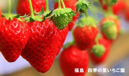 130202 F.shikinosato 02