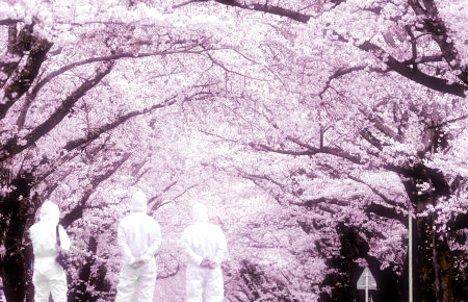 福島富岡町桜