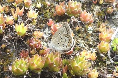 05.16 5月の水窪の蝶 1.jpg