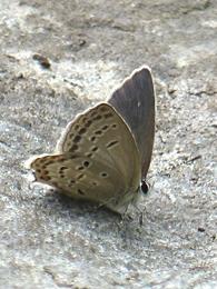 05.16 5月の水窪の蝶 2-1.jpg