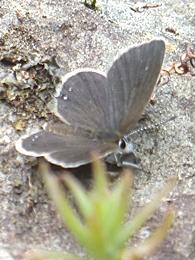 05.16 5月の水窪の蝶 2-2.jpg