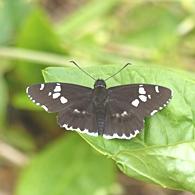05.16 5月の水窪の蝶 9-1.jpg