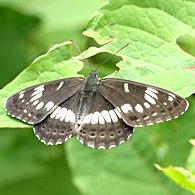 05.16 5月の水窪の蝶 9-2.jpg
