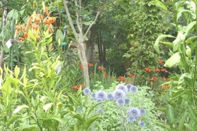 07.19 Mid-Summer Scene in Garden 1.jpg