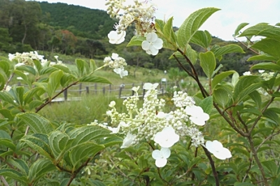 08.18 真夏の湿原&M池の花 1.jpg