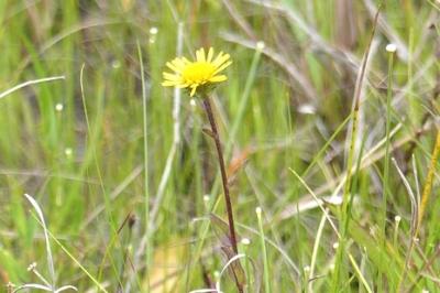 08.18 真夏の湿原&M池の花 3.jpg