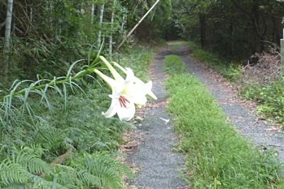 08.18 真夏の湿原&M池の花 5.jpg
