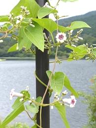 08.18 真夏の湿原&M池の花 7-2.jpg