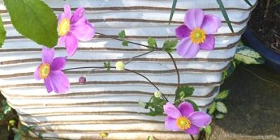 10.12 Octorbar Garden 3-1.jpg