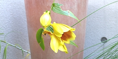 10.12 Octorbar Garden 4-2.jpg
