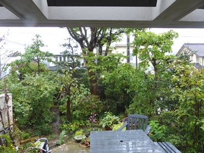 10.16 Octorbar Rainy Garden 1.jpg