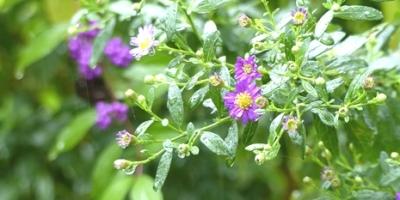 10.16 Octorbar Rainy Garden 3.jpg