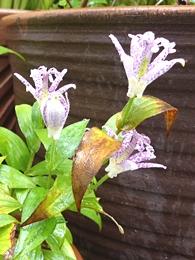 10.16 Octorbar Rainy Garden 4-2.jpg