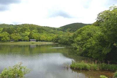 04.29 青葉若葉の湿原周り 1.jpg