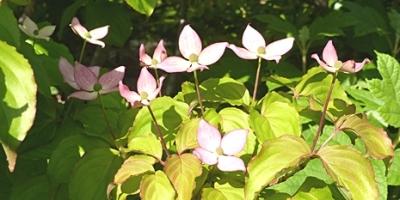 05.01 庭の初夏の木の花 2.jpg