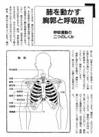 呼吸のしくみ02.jpg
