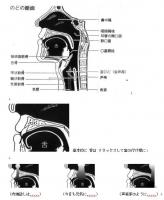 喉の作り.jpg