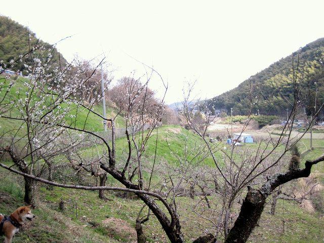 日本・九州の大動脈