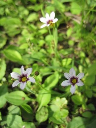 梅雨前の野の花2