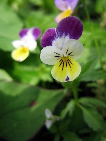 梅雨前の野の花4