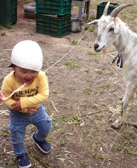 ヤギと少年