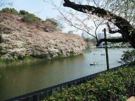 千鳥ヶ淵桜花見5