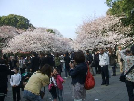 上野公園桜花見4