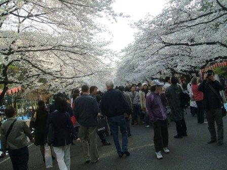 上野公園桜花見5