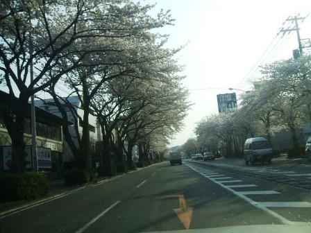 環状4号の桜〜1