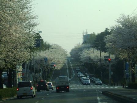 環状4号の桜〜4