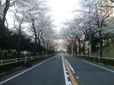 旭区若葉台の桜〜1
