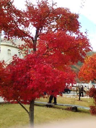 河口湖の紅葉3