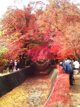 河口湖の紅葉4