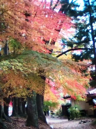 河口湖の紅葉6