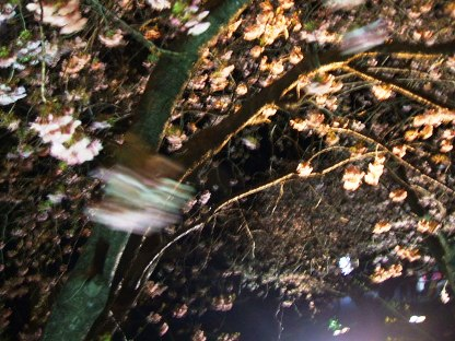 河津夜桜3