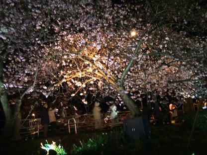 河津夜桜7