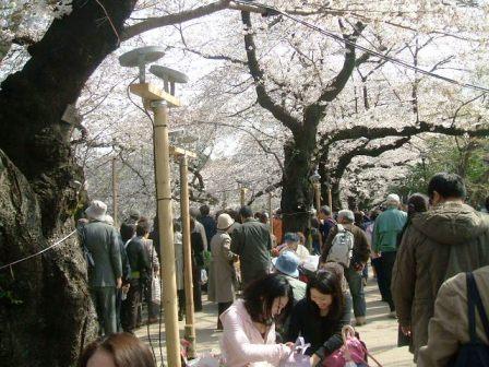 千鳥ヶ淵桜花見2