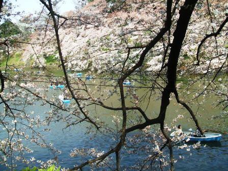 千鳥ヶ淵桜花見4