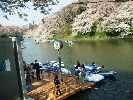 千鳥ヶ淵桜花見6