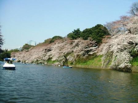 千鳥ヶ淵桜花見8