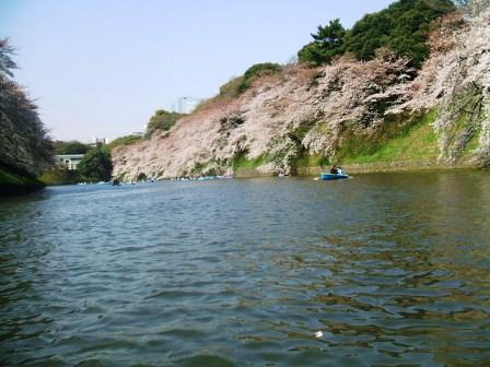 千鳥ヶ淵桜花見9