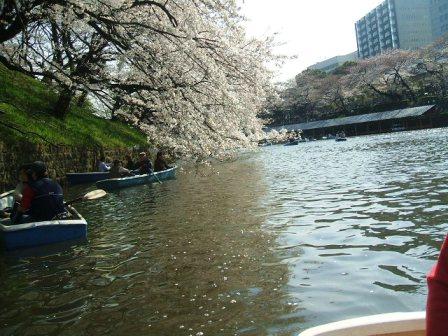 千鳥ヶ淵桜花見10